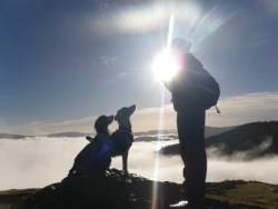Dogs on Summit in the early morning